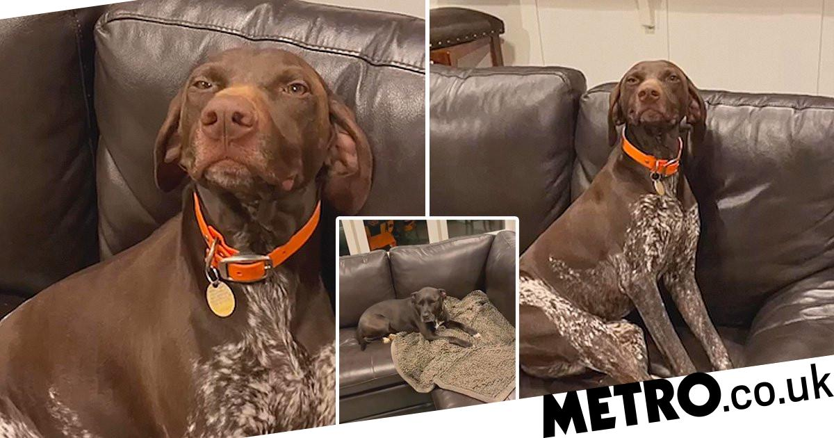 Dog has no regrets after turning on tap and almost flooding home