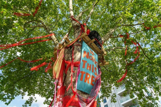 The tree was adorned with ribbons in the campaign to save it