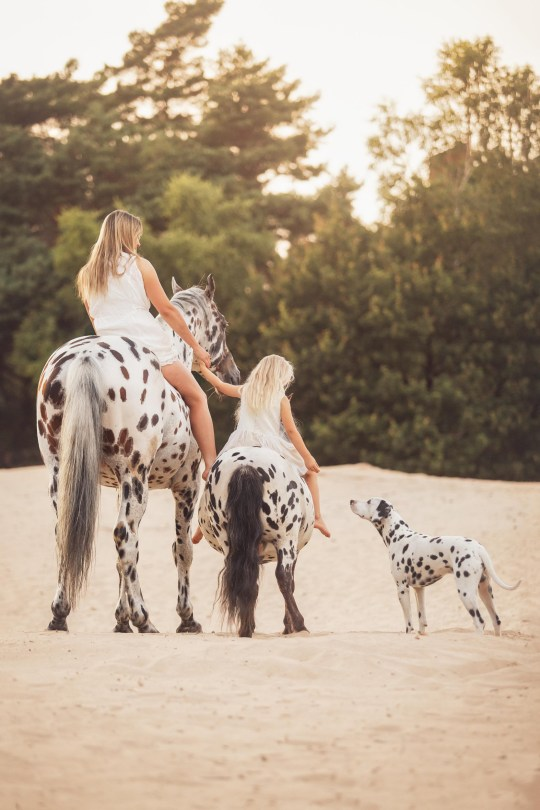 Human Horse Academy / CATERS NEWS (PICTURED Greetje, 35, daughter Jolie Lune Arends, 7, with Appaloosa Nevada, 10, Shetland Napoleon, 6, and Dalmatian Jack Sparrow, 2, Kootwijkerbroek, The Netherlands ) - Meet the horse, dog and pony who are all the best of friends and look IDENTICAL - despite them not even being the same species. Horse trainer Greetje Arends-Hakvoort has three identical looking pets - one Appaloosa stallion, one Shetland pony and one Dalmatian dog - all of which showcase their stunning black spots. Despite their size differences, the three animals love to play together, with owner Greetje regularly catching them running, training, and having fun together. Mum Greetje, 35, loves taking the animals out with her seven-year-old daughter Jolie Lune Arends, who loves riding the Shetland pony - to the amazement of passers by. - SEE CATERS COPY
