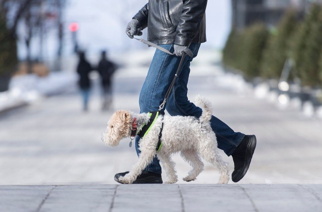 Somebody walking an actual dog, which is allowed