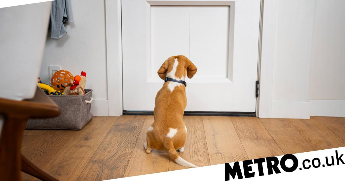 $3,000 'doggie door' connects to your phone to let your pet in or out the house