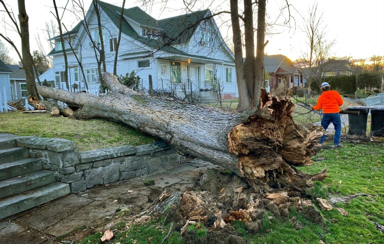 A private tree crew cleans up a wind-downed tree in a Walla Walla, Wash., Wednesday, Jan 13, 2020. High winds caused minimal damage in the eastern Washington town. (Greg Lehman/Walla Walla Union-Bulletin via AP)