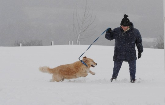 Dated:14/01/2021 WINTER WHITE OUT A dog walker crosses a snow covered football pitch in the village of Dipton, in County Durham, where heavy snowfall has led to winter wonderland scenes today (THURS). See snow round-up