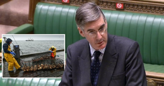 Jacob Rees Mogg says fish are 'better and 'happier' after Brexit