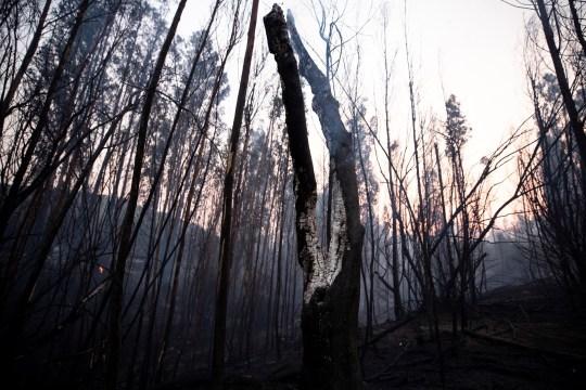 epa08940681 Suite d'un incendie de forêt à Quilpue, région de Valparaiso, Chili, 15 janvier 2021. Le gouvernement chilien a évacué environ 25 000 personnes à titre préventif à la suite d'un incendie de forêt qui a brûlé quelque 300 hectares de forêt, selon l'Office national des urgences ( Onemi).  EPA / Alberto Valdes