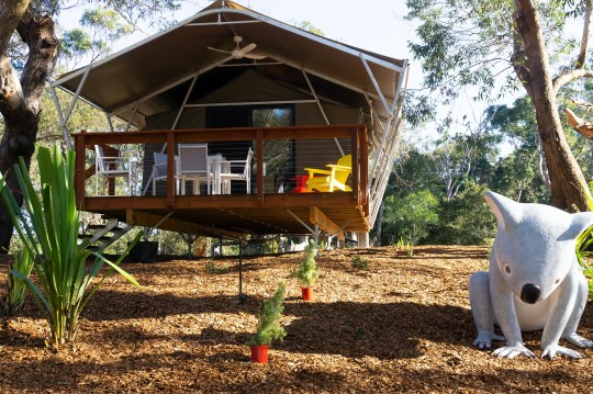 Port Stevens Koala Sanctuary