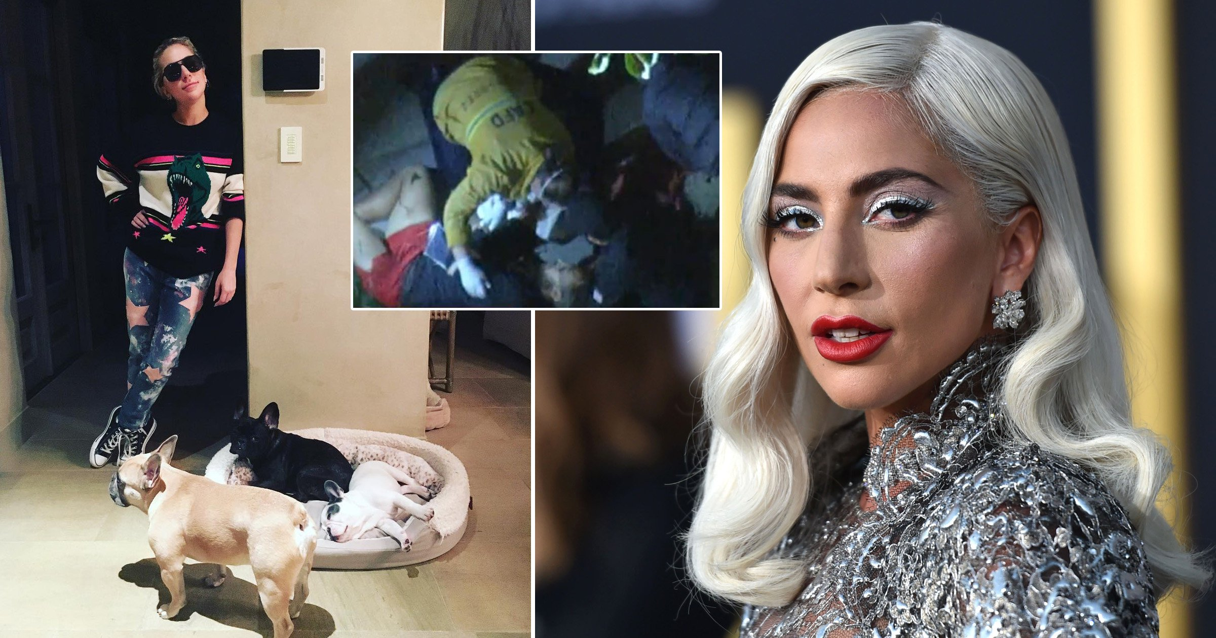 Lady Gaga's dog walker to make 'full recovery' after dognapping attack and thanks singer for her 'support'