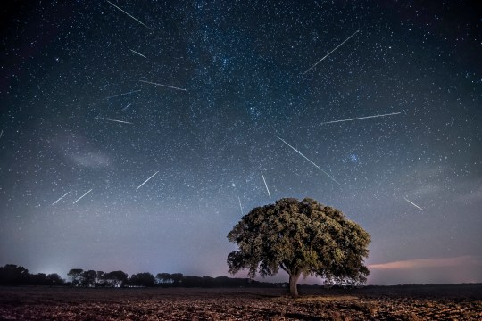Perseids meterors in the night sky above a tree.