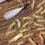 Silent Destroyers: Tips to Spot Termites and Prevent Infestation