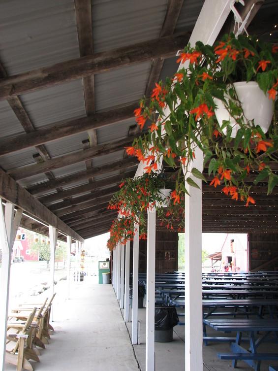 hanging-plants