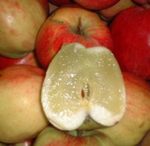 Apple with water core condition