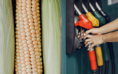 From corn to ethanol: improving the fermentation process with NIRS