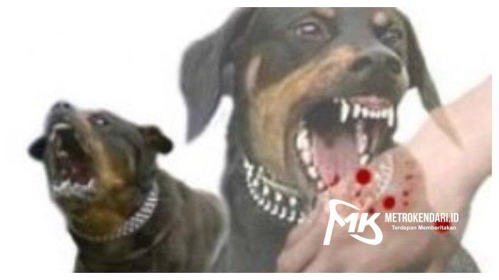 Anjing Gila