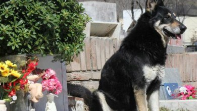 Photo of «Capitán» el perro fiel