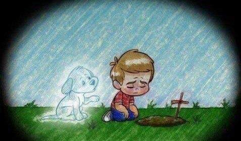 cementerio mascotas soledad