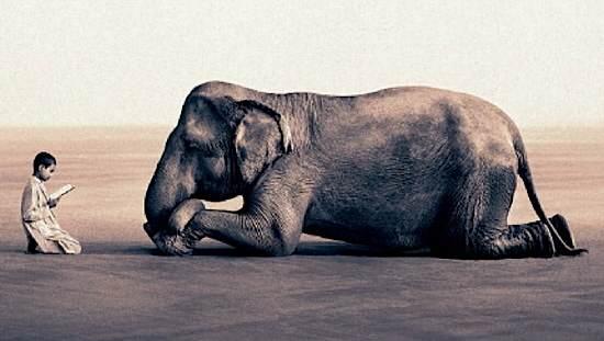 niño-con-elefante