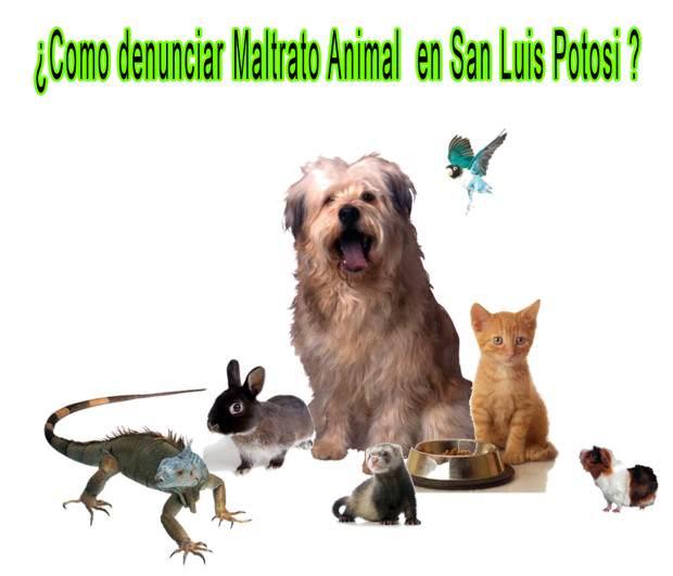 maltrato animal slp