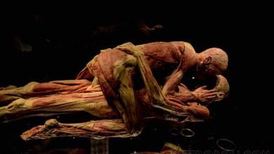 Photo of En San Valentín podrás entrar gratis a la exposición Body Worlds en el Museo Laberinto
