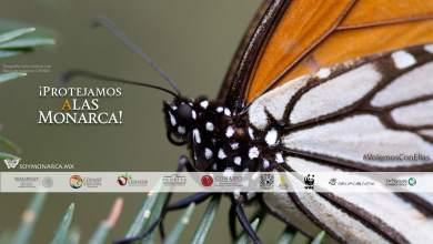 Photo of Mariposa Monarca en su paso por San Luis Potosí