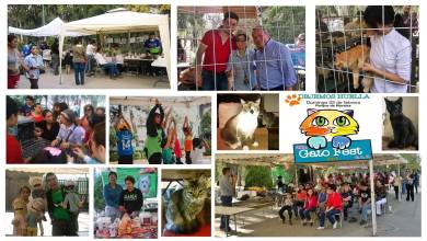 Photo of 2do Gato Fest en San Luis Potosí, en favor de la adopción