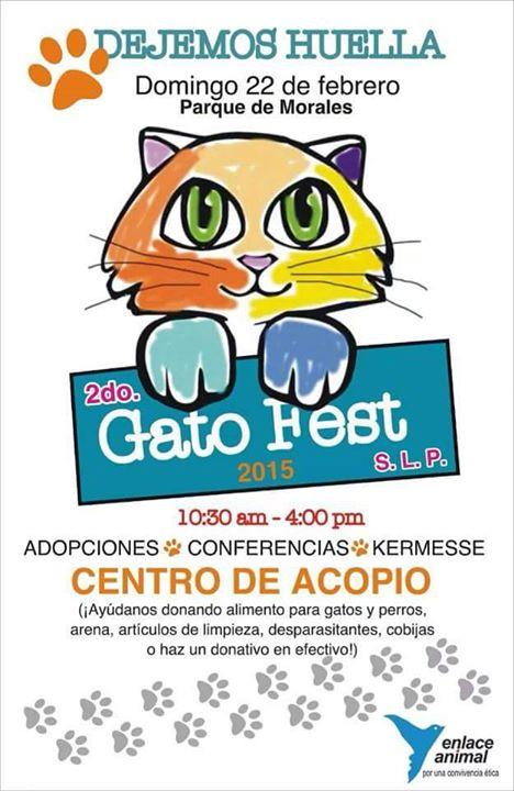 2do Gato Fest @ Parque Morales