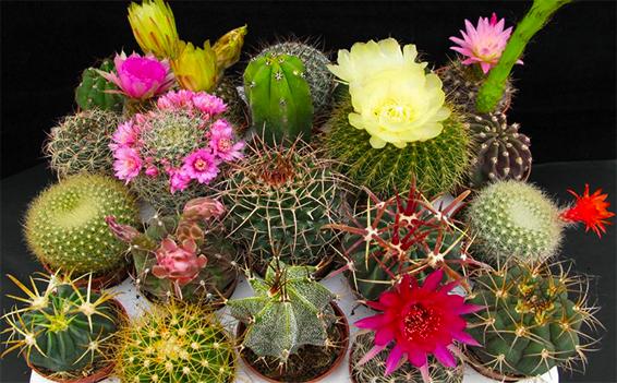 Jardín del Desierto SLP
