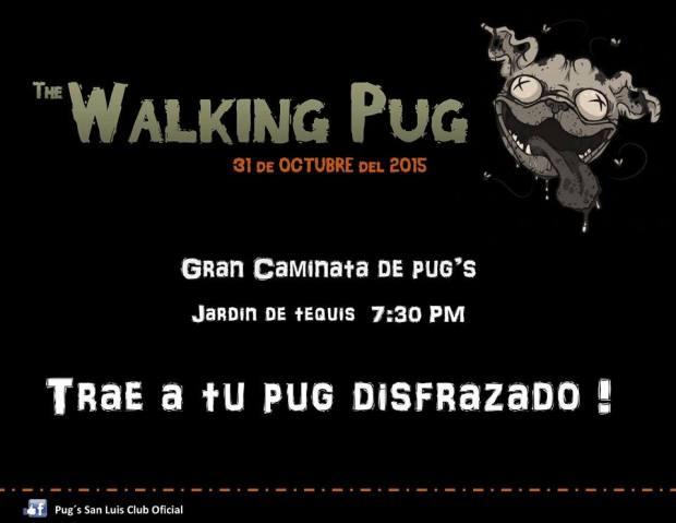 Walking Pug