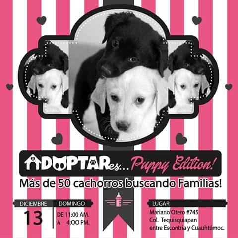 Adoptar...es Puppy Edition @ San Luis Potosí | San Luis Potosí | México