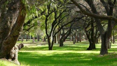 Photo of Parque Tangamanga II contará con unidad de alto rendimiento