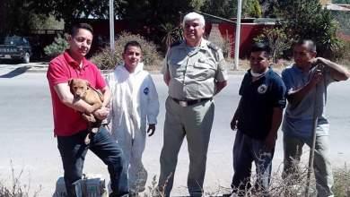 Photo of Rescatistas y bomberos rescatan a cachorro atrapado en alcantarilla