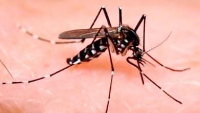 Photo of Acumulación de basura: hogar para el mosquito que transmite el Zika
