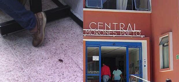 cucarachas hospital central