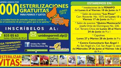 Photo of Realizarán campaña de mil esterilizaciones gratuitas en San Luis Potosí