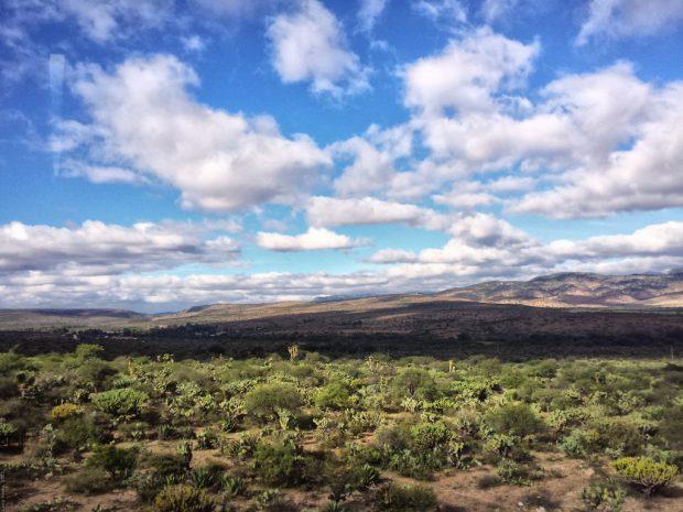 Altiplano Potosino