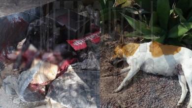 Photo of Denuncia: Matanza de perros en Residencial Bugambilias