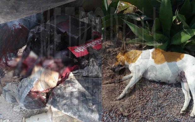 perros residencial bugambilias
