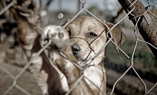 Foto_Maltrato-Animal