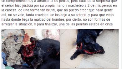 Photo of Video:Joven de Villa de Reyes pide justicia, vecino macheteo sus perros