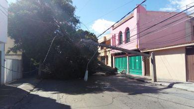 Photo of Fuertes vientos causan afectaciones en la ciudad