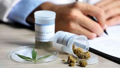 Photo of Diputados legalizan el uso de la marihuana medicinal en México