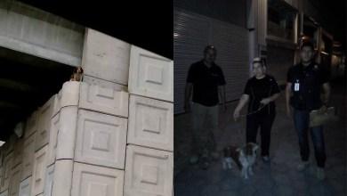 Photo of Protección Civil y Bomberos rescatan a perro atrapado en un puente