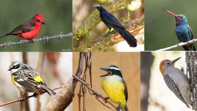 Photo of Parque Morales: un oasis para las aves