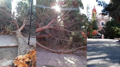 Photo of Cae árbol dentro del Jardín de San Agustín