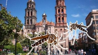 Photo of San Luis Potosí sigue registrando casos de dengue