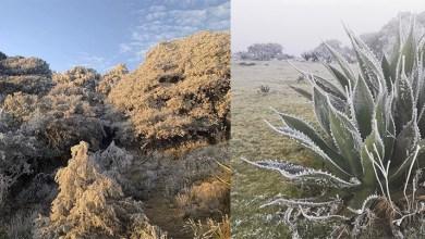 Photo of Galería: Sierra de Álvarez amanece bajo hielo por frente frío