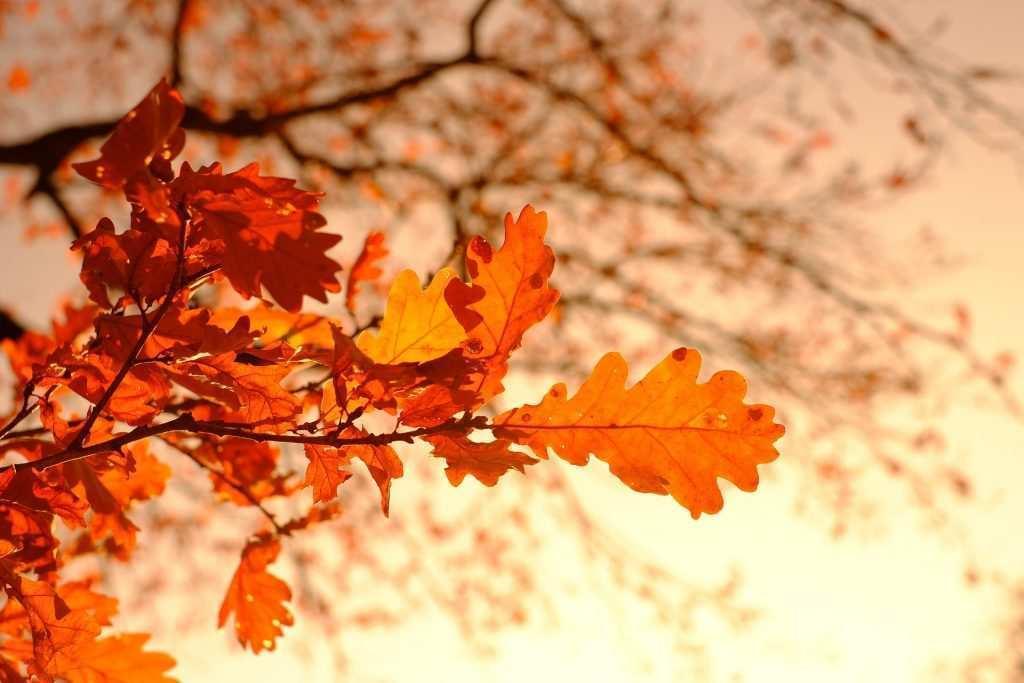 Cadere per rinascere, 10 canzoni per l'autunno
