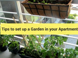 tips to set up a Garden in your Apartment