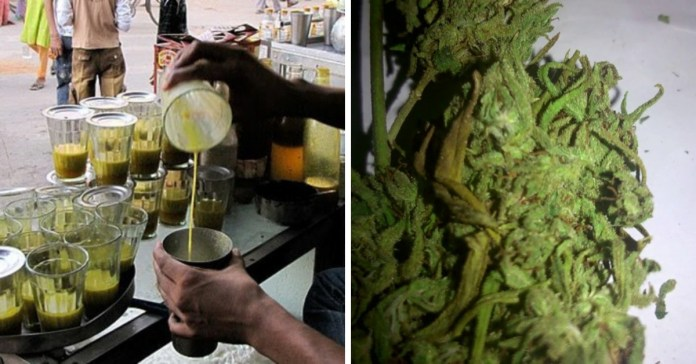 weed places in india