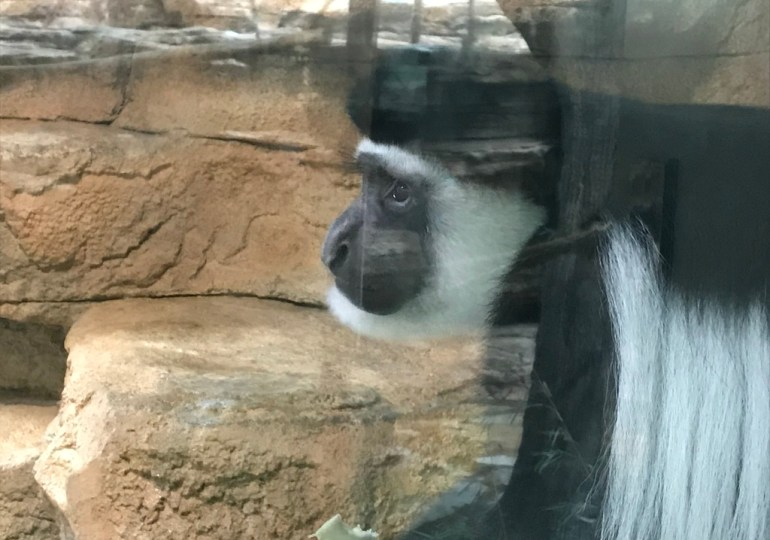 """St. Louis Zoo's """"Primate Canopy Trails"""" to change the way we interact with animals"""