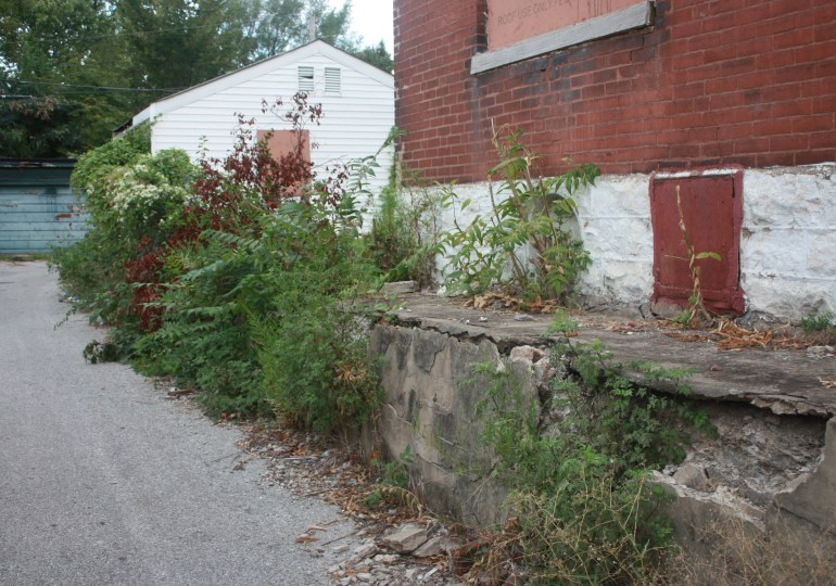 Tall grass on city-owned property sparks new complaints